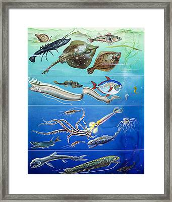 Underwater Creatures Montage Framed Print by English School