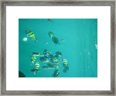 Underwater - Long Boat Tour - Phi Phi Island - 011315 Framed Print by DC Photographer