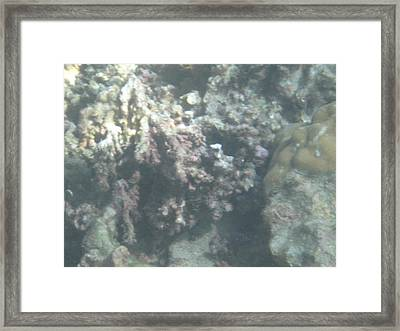 Underwater - Long Boat Tour - Phi Phi Island - 011354 Framed Print by DC Photographer