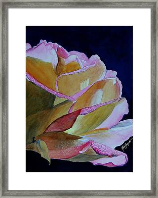 Unfolding Rose Framed Print by Ruth Bodycott