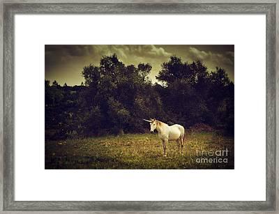 Unicorn Framed Print by Carlos Caetano