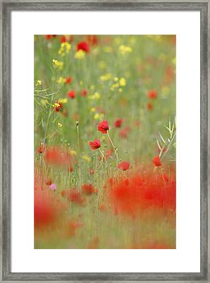 United Colours Of Summer Framed Print by Roeselien Raimond
