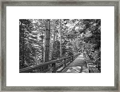 University Of California Santa Cruz Walkway Framed Print by University Icons
