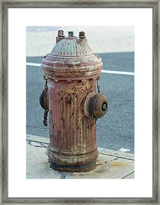 Unsung Hero Framed Print by Lisa Phillips