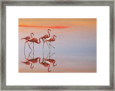 Untitled Framed Print by Anna Cseresnjes