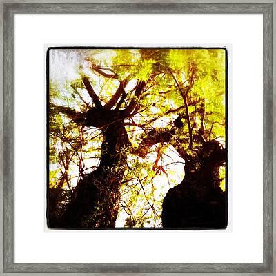 Untitled-twin Trees Framed Print by Juliann Sweet