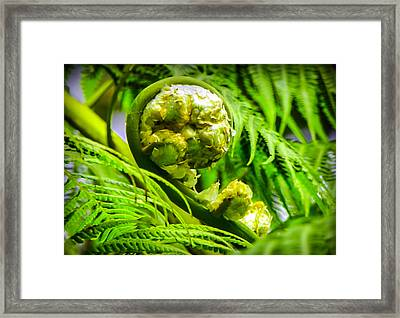 Unveiling Life Framed Print by Karen Wiles