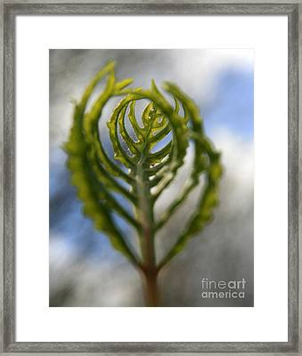 Unwrapped Framed Print by Neal  Eslinger