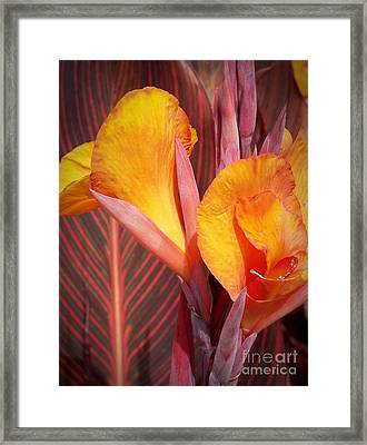 Up Close And Personal Framed Print by Chalet Roome-Rigdon