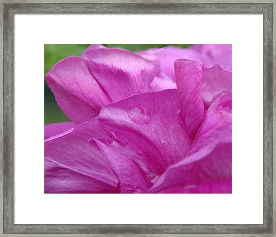 Up Close Framed Print by Rona Black