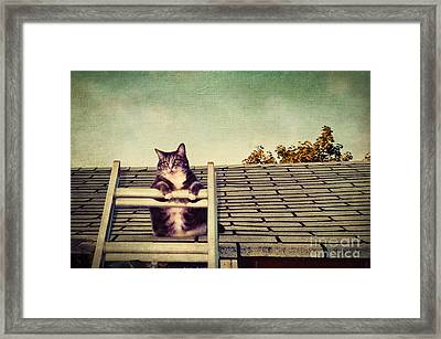 Cat Up On The Roof Framed Print by Colleen Kammerer