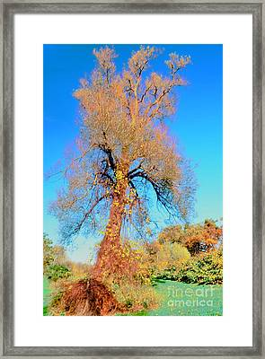 Up Rooted Tree Framed Print by Kathleen Struckle