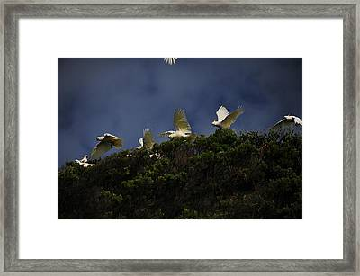 Up Up And Away Framed Print by Harry Spitz