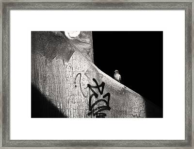 Urban Dweller Framed Print by Matthew Blum