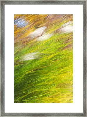 Urban Nature Fall Grass Abstract Framed Print by Christina Rollo