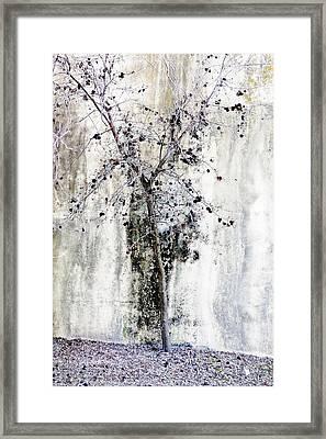 Urban Oak Tree Framed Print by Pamela Patch