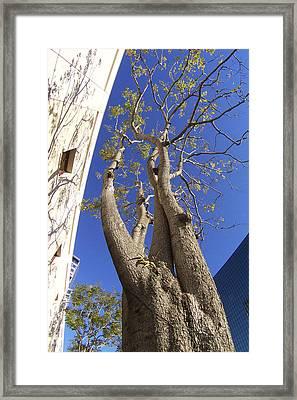 Urban Trees No 1 Framed Print by Ben and Raisa Gertsberg