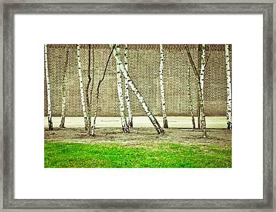Urban Woodland Framed Print by Tom Gowanlock