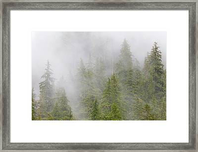 Usa, Alaska Fog In Spruce And Hemlock Framed Print by Jaynes Gallery