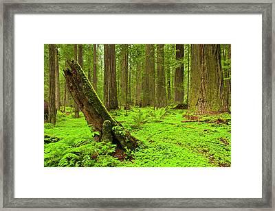 Usa, California, Humboldt Redwoods Framed Print by Jaynes Gallery