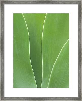 Usa, California, San Diego, Agave Framed Print by Ann Collins