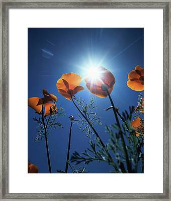 Usa, California, The Sunset Behind An Framed Print by Christopher Talbot Frank
