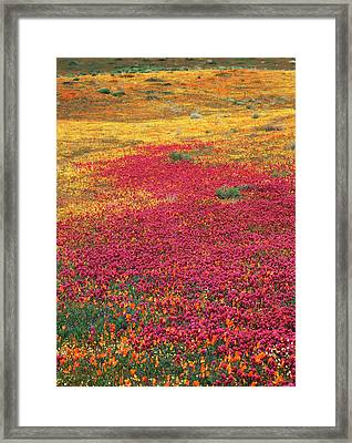 Usa, California, View Of Owl's Clover Framed Print by Stuart Westmorland