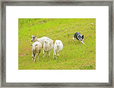 Usa, Colorado, Summit County, Copper Framed Print by Jaynes Gallery