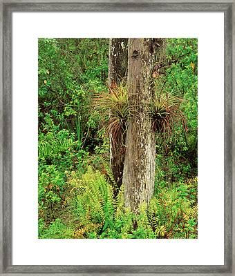 Usa, Florida, Everglades National Park Framed Print by Adam Jones