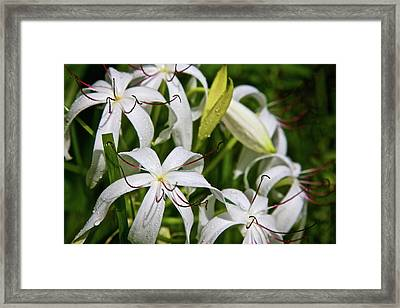 Usa, Florida, Fakahatchee Strand Framed Print by Connie Bransilver
