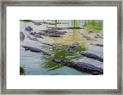 Usa, Florida, Ochopee Framed Print by Charles Crust