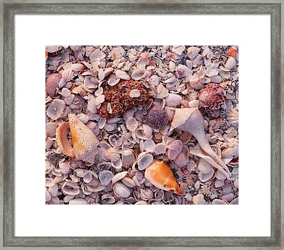 Usa, Florida, Sanibel Island, Gulf Framed Print by Panoramic Images