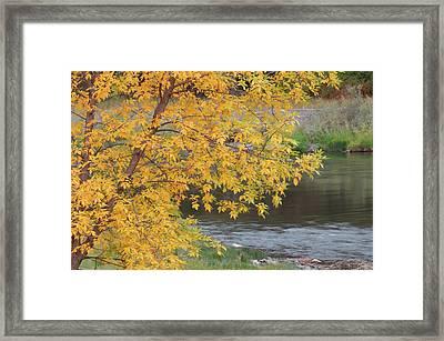 Usa, Idaho, Salmon River, Fall Framed Print by Gerry Reynolds