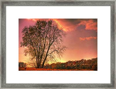 Usa, Indiana Giant Tree In Prophetstown Framed Print by Rona Schwarz