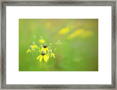 Usa, Indianapolis Framed Print by Jaynes Gallery
