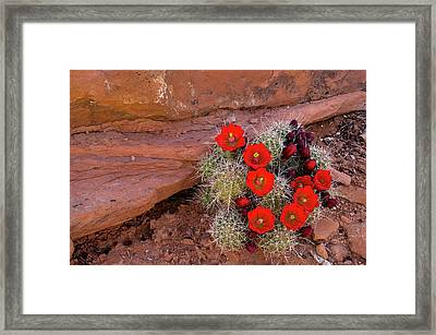 Usa, Utah, Cedar Mesa Framed Print by Charles Crust