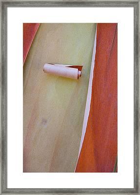 Usa, Washington, Port Townsend Framed Print by Jaynes Gallery