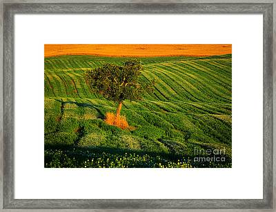Val D'orcia Tree Framed Print by Inge Johnsson