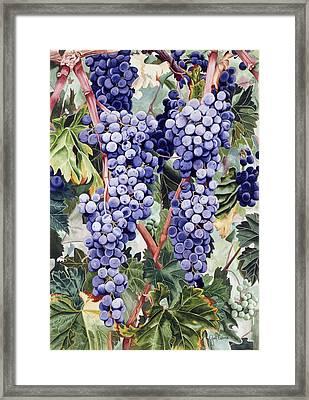 Valley Vines Framed Print by Gael Graysen