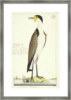Vanellus Miles Framed Print by Natural History Museum, London