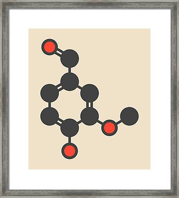 Vanillin Vanilla Extract Molecule Framed Print by Molekuul