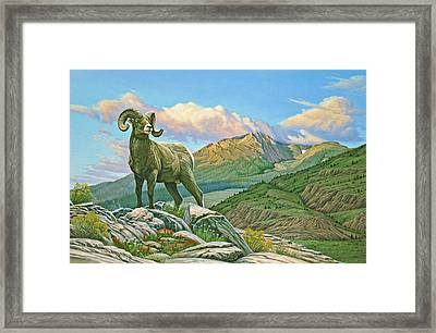 Vantage Point - Bighorn Framed Print by Paul Krapf