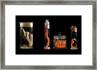 Various Animal Specimens Framed Print by Natural History Museum, London