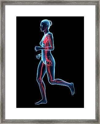 Vascular System Of Runner Framed Print by Sebastian Kaulitzki