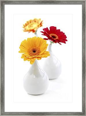 Vases With Gerbera Flowers Framed Print by Elena Elisseeva