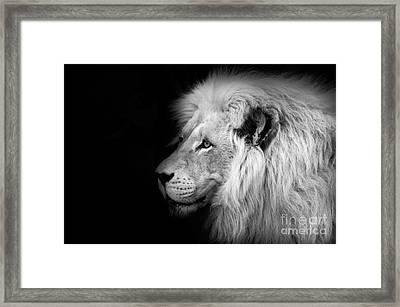 Vegas Lion - Black And White Framed Print by Ian Monk