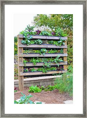 Vegetable Garden 2 Framed Print by Lanjee Chee