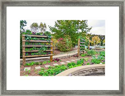 Vegetable Garden 4 Framed Print by Lanjee Chee