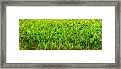Vegetation, Boynton Beach, Florida, Usa Framed Print by Panoramic Images