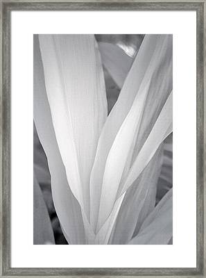 Veil Framed Print by Adam Romanowicz